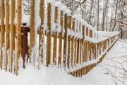 pophyr_im_Winter_03